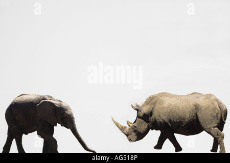 STUDIO An adult rhino walking across the picture towards a baby elephant - Stock Photo