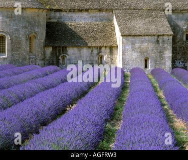 FR - PROVENCE:  Abbaye de Senanque in the Luberon - Stock Photo