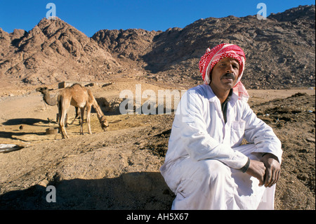 Bedu nomad with camels near Mount Sinai Sinai Egypt North Africa Africa - Stock Photo