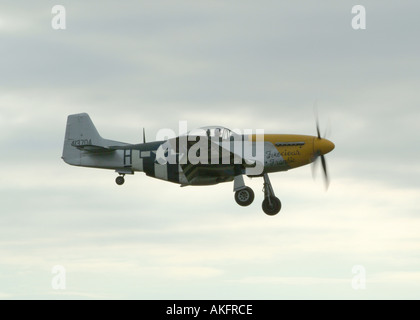 Mustang P51D Fighter Plane Landing at Goodwood Airfield - Stock Photo