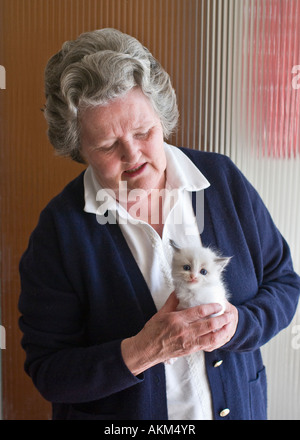 Lady handling and evaluating a tiny blue bicolour Ragdoll kitten in England UK with a view to choosing one - Stock Photo