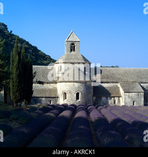 Abbaye de Sénanque, Cistercian abbey and monastery, 12th century, blooming lavender field, Gordes, Lubéron, Vaucluse, - Stock Photo