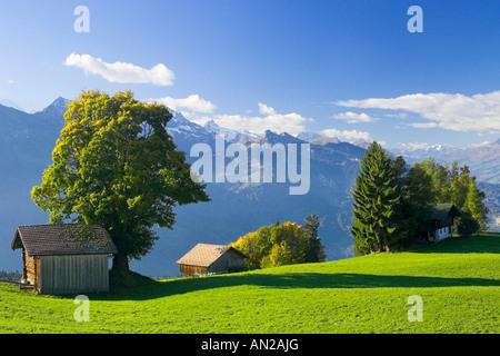 Beatenberg Almhuette Herbst Schweiz Berner Oberland switzerland - Stock Photo