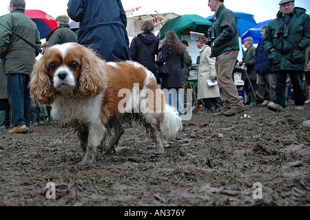 pic martin phelps 14 01 06 barbury castle point to point non runner - Stock Photo