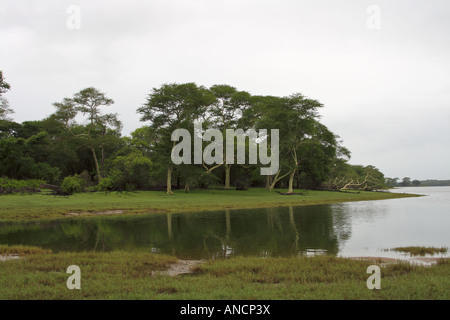 The green grasses and fever trees along the banks of the Nyamithi pan are a delight to the eye. Ndumo. - Stock Photo