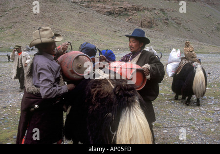 YAKS are loaded for the KORA around MOUNT KAILASH 6638 METERS the most sacred HIMALAYAN PEAK TIBET - Stock Photo