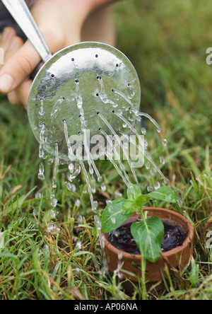 Potted seedling being watered - Stock Photo