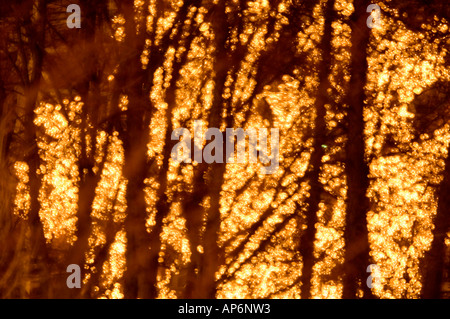 Forest impression - Stock Photo