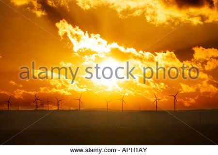 Sunset behind wind wheels - Stock Photo