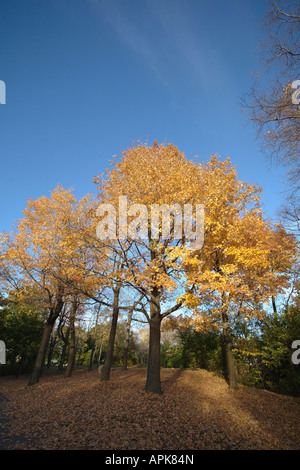 Autumn trees. Jean-Drapeau Park, St Helen's Island, Montreal, Quebec, Canada - Stock Photo