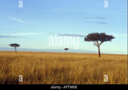 Three ancient balanites trees in vast empty savannah landscape Masai Mara National Reserve Kenya East Africa - Stock Photo
