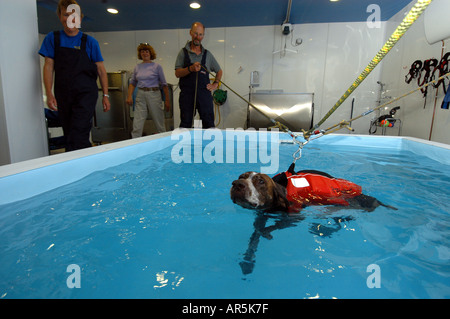 Dog Hydrotherapy Pool - Stock Photo