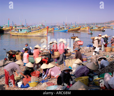 Fishing village people collecting the morning catch, Mui Ne, south-central coast, Vietnam, Indochina, Southeast - Stock Photo