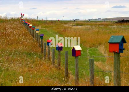 BIRD HOUSES in a row - Stock Photo