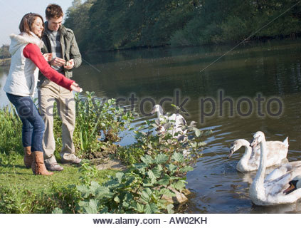 Couple outdoors feeding swans in a lake - Stock Photo