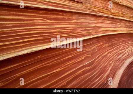 Detail of sandstone formation known as The Wave in the Coyote Buttes area Paria Canyon Vermilion Cliffs Wilderness - Stock Photo