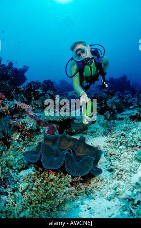 Diver and Giant Clam Tridacna squamosa Maldives Indian Ocean Meemu Atoll - Stock Photo