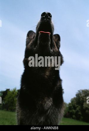 Dog, daytime, view from below. - Stock Photo