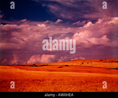 Warm late afternoon sunlight bathes the ripened wheatfields near Cottonwood in Northern Idaho - Stock Photo
