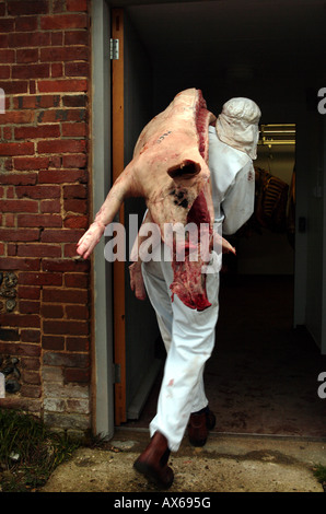 Abattoir staff member delivers butchered whole organic pig to freezer room - Stock Photo