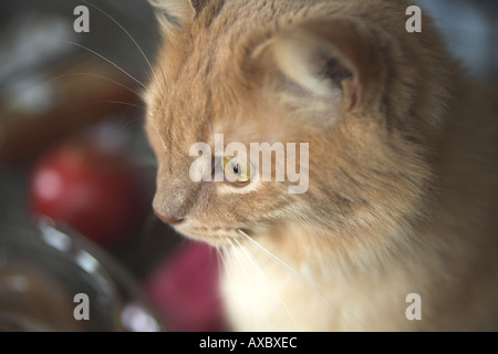 Cat looking out of window, horizontal image - Stock Photo