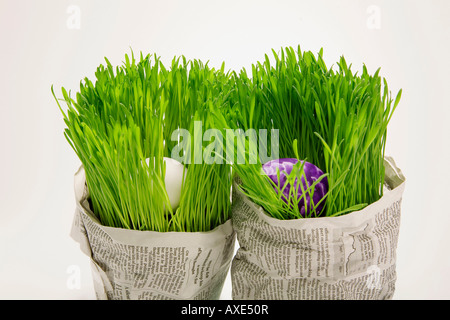 Easter eggs in grass, wrapped wrapped in newspaper, close-up - Stock Photo