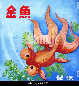 Fancy Bubble Eye Goldfish - Stock Photo
