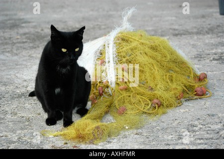 Black cat with yellow eyes sitting next to a yellow fishing net - Stock Photo