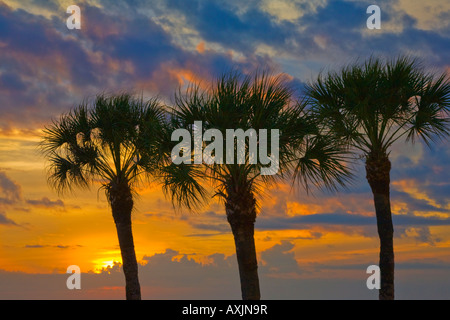 Sunset though three palm trees over the Gulf of Mexico from Fort Myers Beach in Florida - Stock Photo
