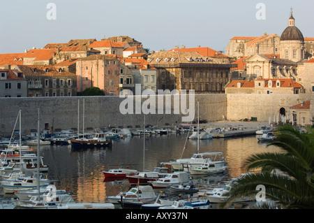 Palm at Harbour, Dubrovnik, Croatia - Stock Photo