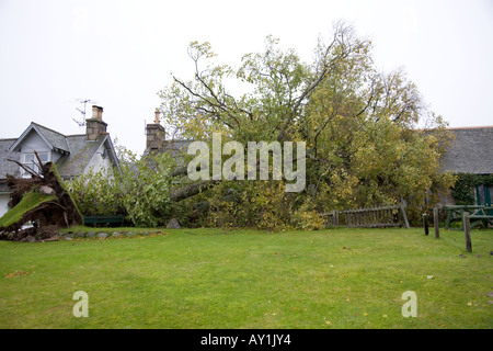 Storm damage fallen tree blown over onto domestic property after severe gale Braemar, Aberdeenshire, Scotland uk - Stock Photo