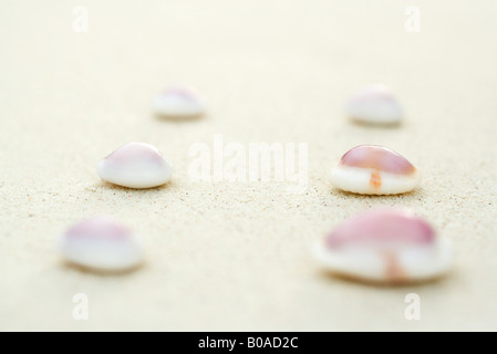 Seashells lined up in two rows on sand, close-up - Stock Photo