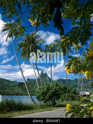 Road and palm trees along Cook's or Paopao Bay, Moorea, Society Islands, French Polynesia, South Pacific, Oceania - Stock Photo