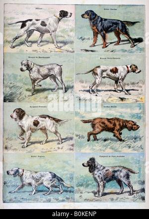 Gun dogs, 1897. Artist: P Mahler - Stock Photo