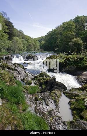 River Teifi Cenarth Falls Cardigan Wales UK - Stock Photo