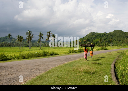 Women wearing colourful clothing carrying rice on their heads and walking past rice fields, paddies near Biraq, - Stock Photo