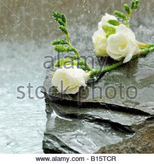 Freesia blossoms on stone - Stock Photo