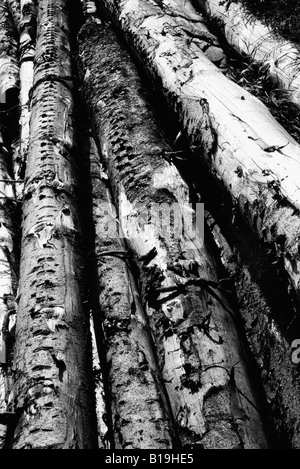 Timber, black and white - Stock Photo