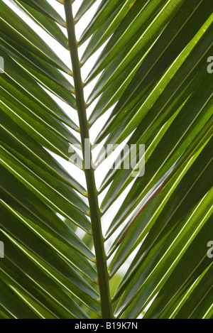 Palm leaf, extreme close-up - Stock Photo