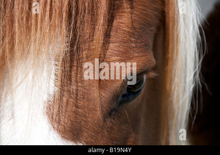Eye of a horse close up - Stock Photo