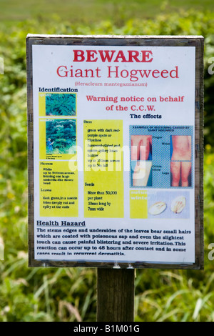 Warning sign for presence of Giant Hogweed Heracleum mantegazzianum Newport wetlands Wales UK - Stock Photo