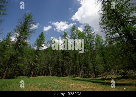Val Troncea regional park near Sestriere. Piemonte, Italy - Stock Photo