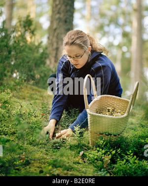 Young woman picking mushrooms in a forest Finland - Stock Photo