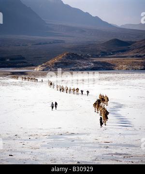 Djibouti, Lake Assal. An Afar camel caravan crosses the salt flats of Lake Assal, as shadows lengthen in the late - Stock Photo