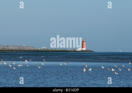 Poolbeg and Howth Head lighthouse with seagulls feeding in the foreground. - Stock Photo
