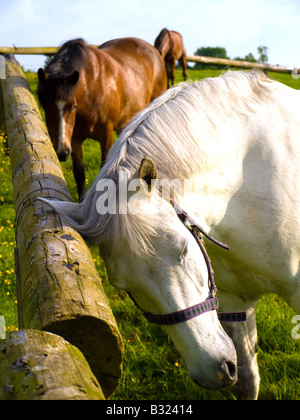 Horse in Beautiful Green Field in British Summer Morning - Stock Photo