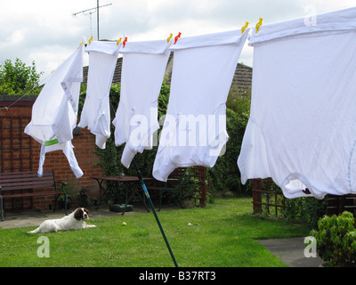 Wash Day, clothes on the washing line, blowing dry in the wind. White shirts peg in a row, sleeping dog in the background. - Stock Photo