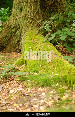 Moss on a tree stump - Stock Photo