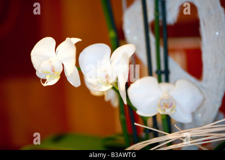 Orchidee, Orchid - Stock Photo