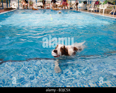 'A swimming pool for dogs only at Petworld, an animal playground in Hong Kong ' - Stock Photo